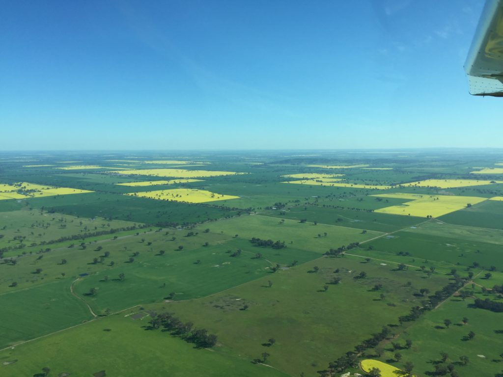 Canola crops around Young