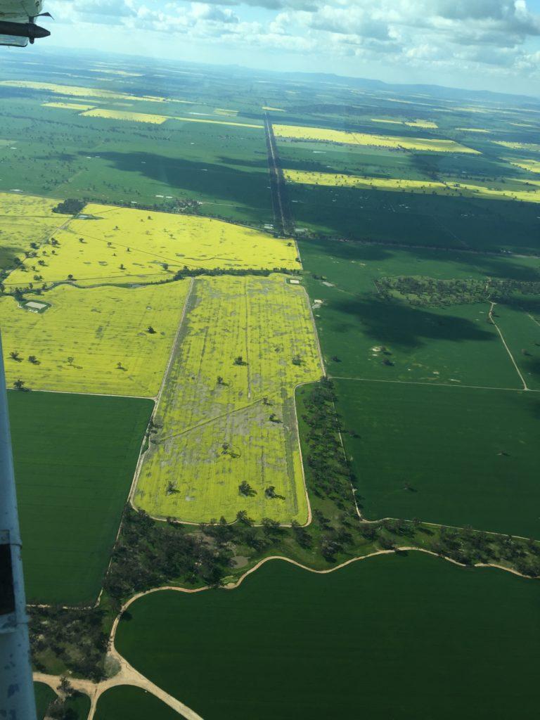 Pest damage to Canola crop